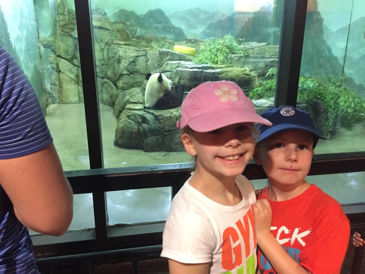 Pandas at the National Zoo